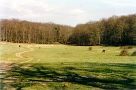 bosco di manziana